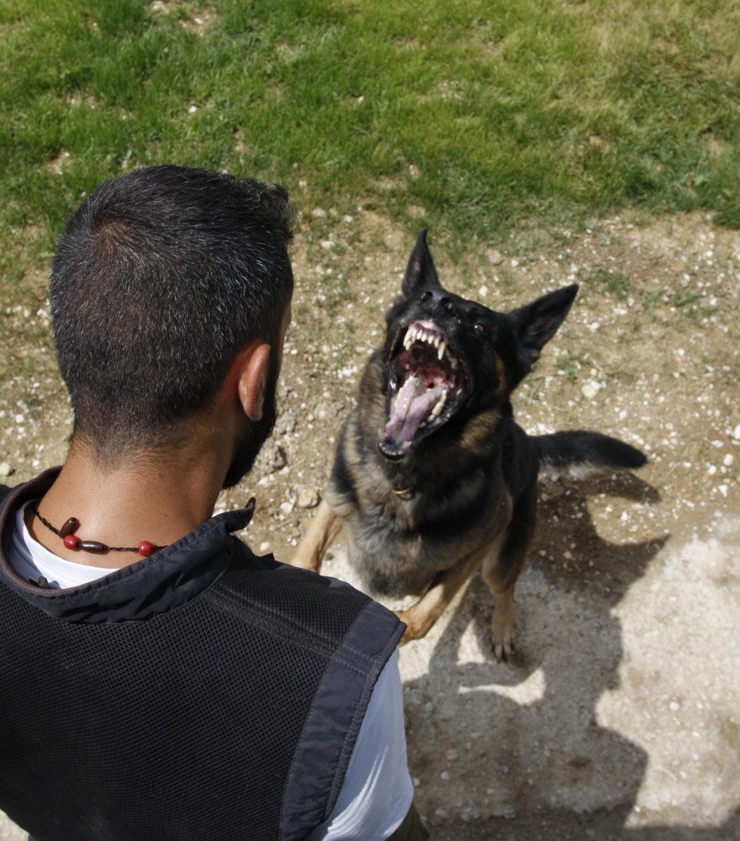 Εκπαίδευση σκύλου φύλακα