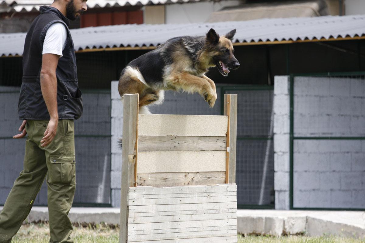 Προχωρημένη – Ειδική εκπαίδευση σκύλων